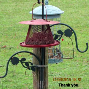 Bird on green feeder