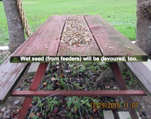 Wet seed on picnic table