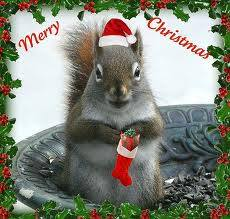 Merry Christmas message from a squirrel