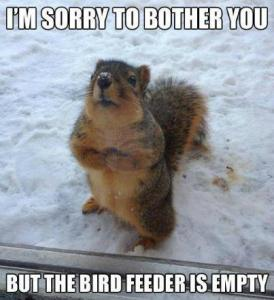 Squirrel with comment