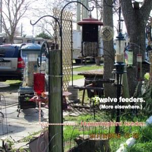 Twelve feeders including Hummingbird