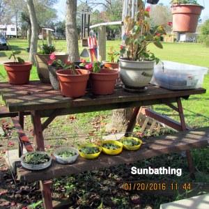 Sunbathing (1)