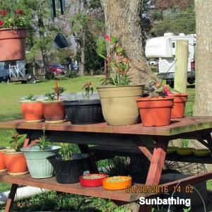 Sunbathing (2)