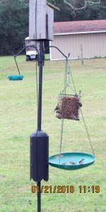 Lots of birds on feeder