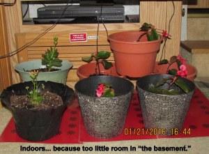 Planters indoors