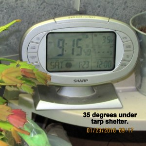 Temperature under tarp at nine with little clock