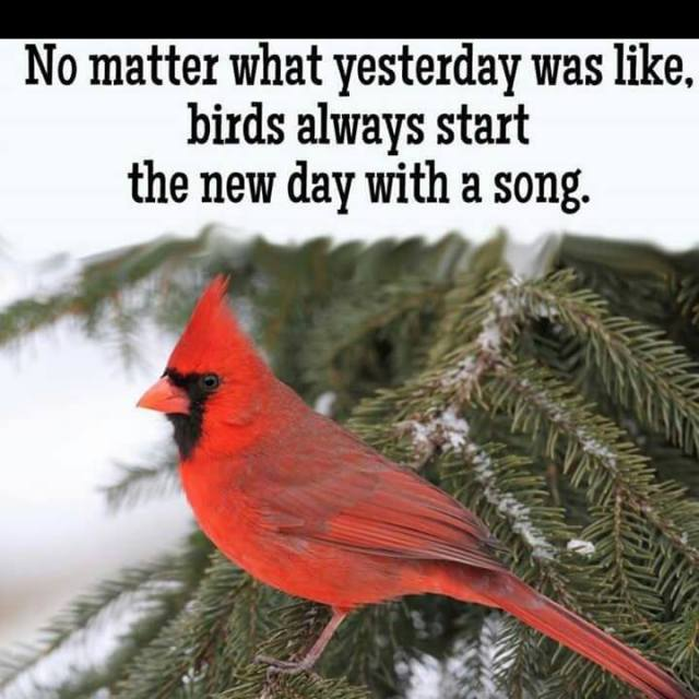 Poster with Cardinal bird and good message