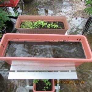 Planter full of water