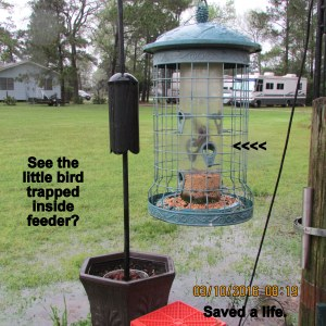 Bird caught inside feeder