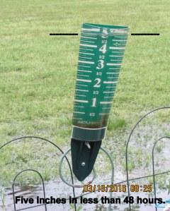 Five inches of water in rain gauge
