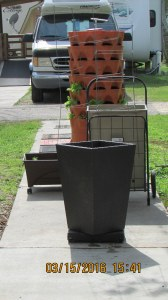 Ready for a tomato plant