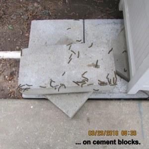 On the cement blocks