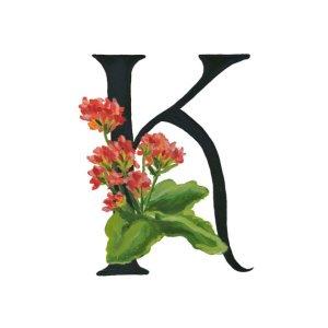 Alphabet letter K for Kalanchoe