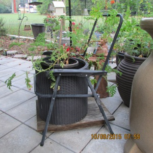 Planter is framework of chair