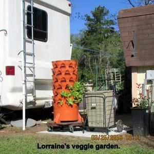 Lorraine's veggie garden