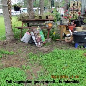 Tall vegetation pulled