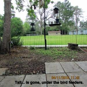 Removed under bird feeders