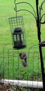Squirrel and squirrel proof feeder