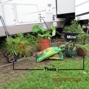 Half-a-dozen plants to nurture