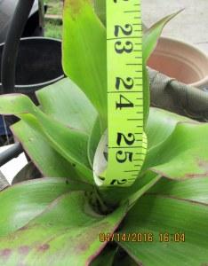 Twenty-four inches tall (2)