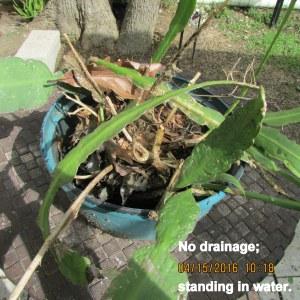 No drainage