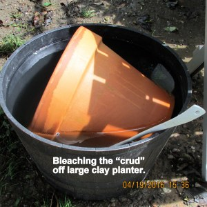 Bleaching the clay planter