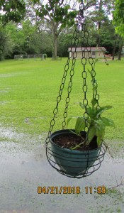 Hanging basket over Lake Lorraine