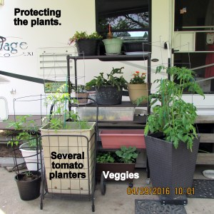 Protecting the plants