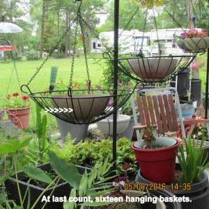 Sixteen hanging baskets