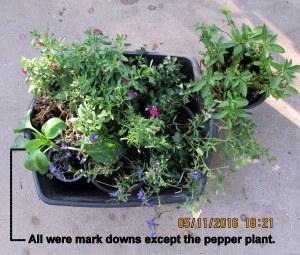 Mark down plants