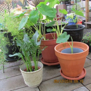 Planters with dollies back to original location