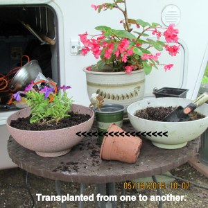 Transplanted from one to another