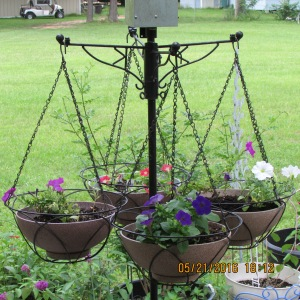 """Petunias in """"before"""" picture"""