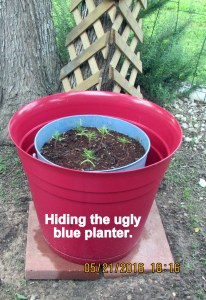 In a new red planter