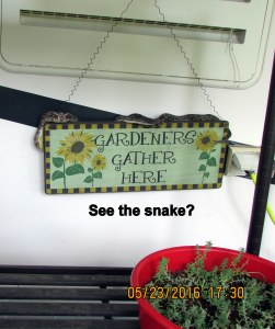 See the snake?