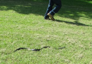 Snake at Elbert's feet