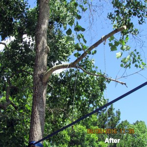 After limbs were cut