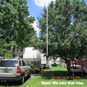 Next, we trim this tree
