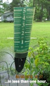 Over an inch of rain in gauge