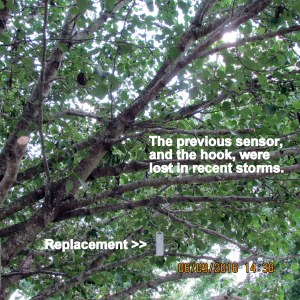 Sensor in the tree