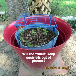 Attempt to keep squirrels off planter