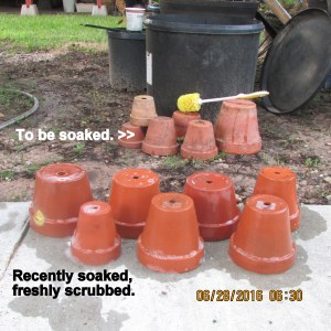 Fresh scrubbed clay pots