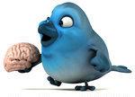 Bluebird on the brain