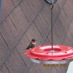 Hummingbird outside kitchen window