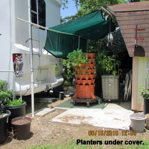 Planters under cover