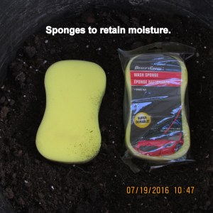 Sponges to retain moisture