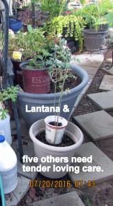 Five plants need TLC