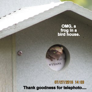 Frog in the bird house