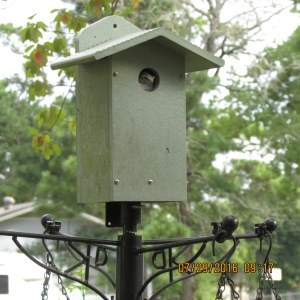 Frog in bird house (1)
