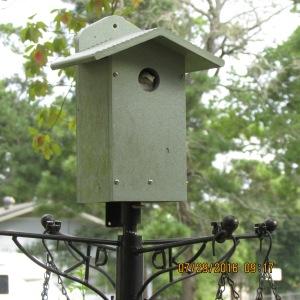 Frog in bird house (1)